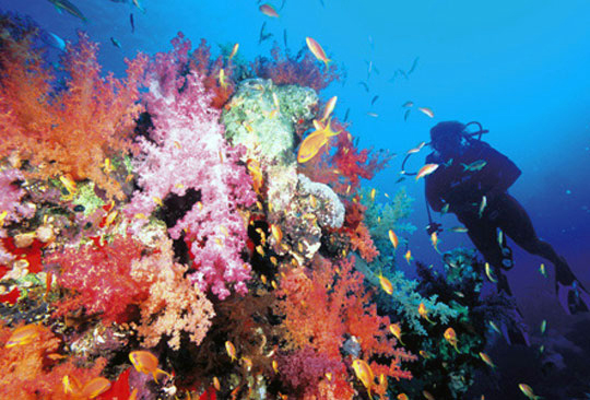 Dahab Ras Mohamed National Park Snorkeling Trip by Vehicle