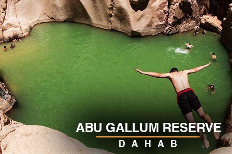 Abu gallum
